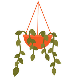 Potted evergreen house plant in a hanging pot eco vector