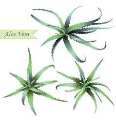 Set of aloe vera plants vector image