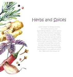 watercolor collection fresh herbs and spices vector image