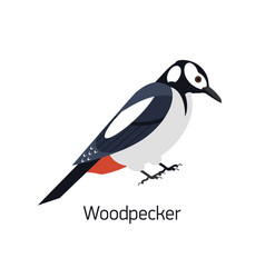 woodpecker isolated on white background beautiful vector image
