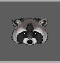head of raccoon portrait of wild animal hand vector image