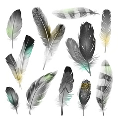 Black And White Feathers Set vector image