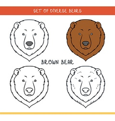 Brown grizzly bear Set isolated face heads bear in vector image