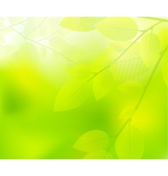 Green leaves nature design vector