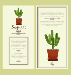greeting card with saguaro plant vector image vector image