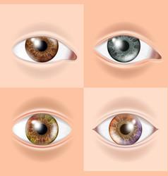 human eye set vision concept medical eye vector image