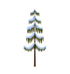 isolated spruce covered with snow on white winter vector image