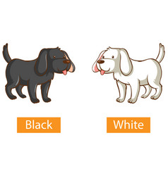 Opposite adjectives words with black and white vector