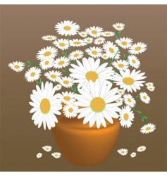 a beautiful bouquet of daisies vector image vector image