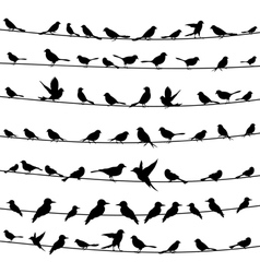 Bird on a wire4 vector image vector image