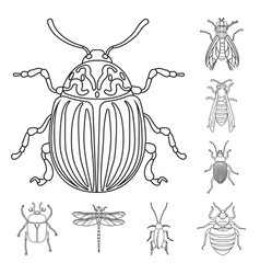 design insect and fly logo collection vector image
