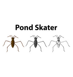 doodle character for pond skater vector image