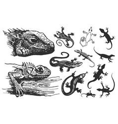 Hand drawn of lizard vector