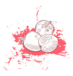 hand drawn sketch tomato on grunge ink splash vector image