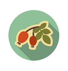 Rosehip branch with red berries flat icon vector