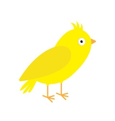 Canary bird Yellow feather Isolated White vector image vector image