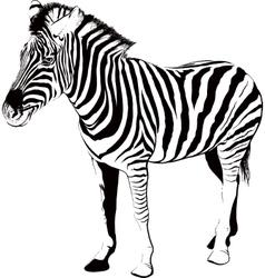 Zebra in profile vector image