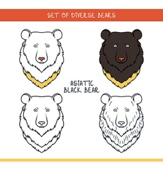Asiatic black bear Set isolated face heads bear in vector image