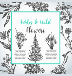 Background with hand drawn herbs and wild flowers vector