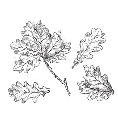 hand drawing leaves 2 vector image