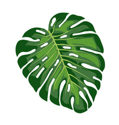Leaf tropical monstera vector