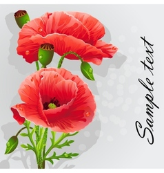 Romantic background with poppies vector