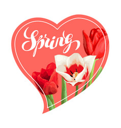 spring background with red and white tulips vector image