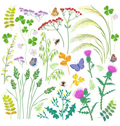 Wild herbs wildflowers cereals and insects set vector