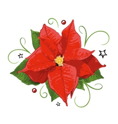 Poinsettia vector image
