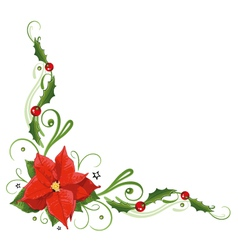 Poinsettia holly vector image vector image