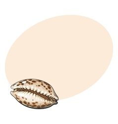 Colorful cowrie or cowry sea shell sketch style vector image