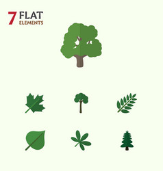 Flat icon natural set of acacia leaf hickory vector