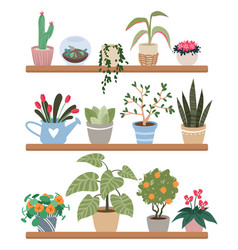 home plants in pots on shelves houseplants vector image