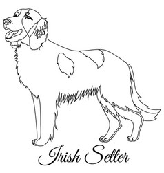 irish red setter dog outline vector image