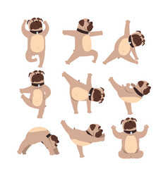 Funny bulldog in different poses of yoga healthy vector