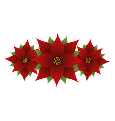 christmas poinsettia flower and leaves decoration vector image