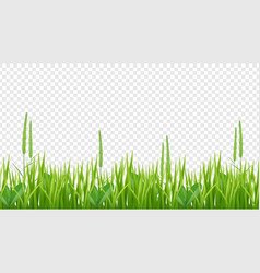 green grass border realistic field or meadow vector image