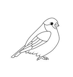 Oloring book bullfinch vector