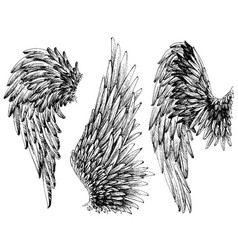 Wings set hand drawn detailed wings collection vector