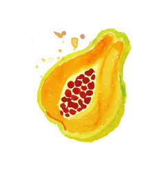 Bright watercolor painting of piece papaya pawpaw vector