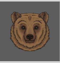 head of brown bear portrait of wild animal hand vector image