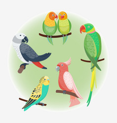 cartoon tropical parrot wild animal bird vector image