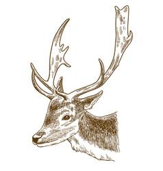 engraving of spotted deer head vector image