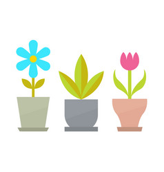 Indoor flowers with blossom and big leaves set vector