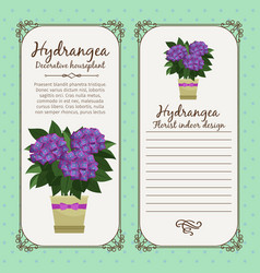 vintage label with hydrangea plant vector image