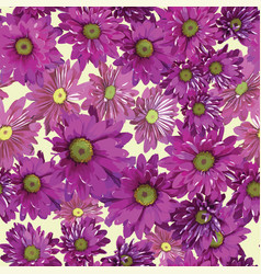 background of bright purple chrysanthemums vector image