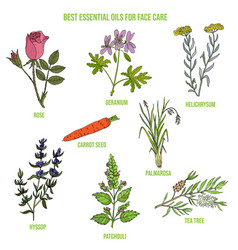 Best essential oils for face care vector