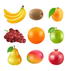 different fruits realistic vector image