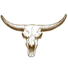 Engraving of steppe bison skull vector