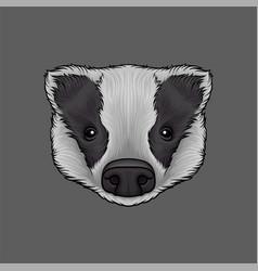 Head of badger portrait of wild animal hand drawn vector